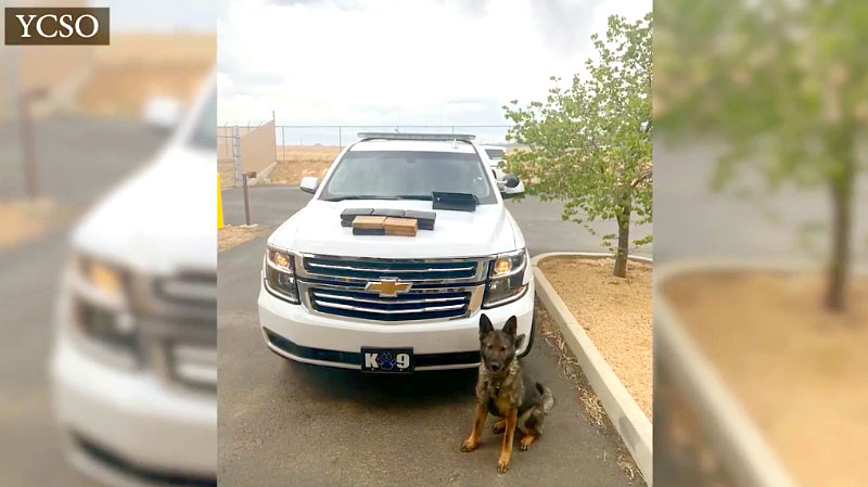 YCSO K-9 Alerts to $150M in Powdered Fentanyl