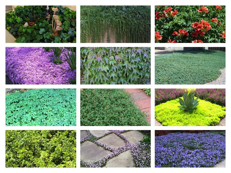 12 Ground Covers That Provide Year-Round Color